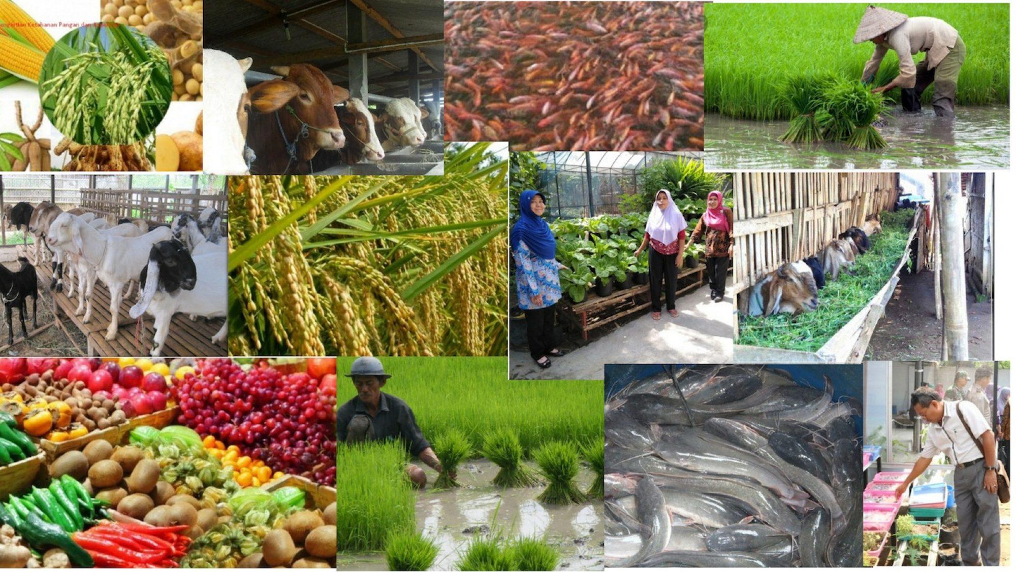Dinas Pertanian dan Ketahanan Pangan
